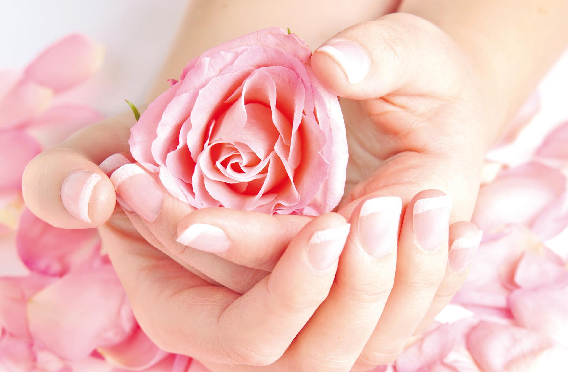 Hände mit French lackierten Fingernägel halten eine rosa Rose. Rosenblätter liegen unter den Händen