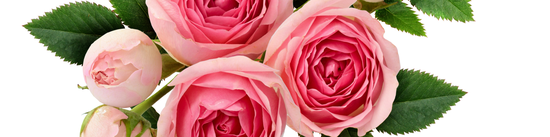 Rosa Rosen Strauß